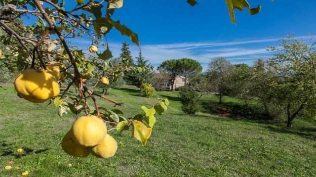 Picture No.08 of Sansepolcro, Arezzo, Tuscany, Italy