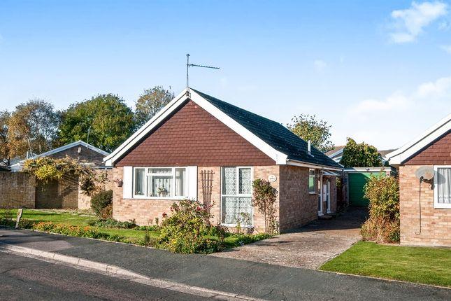 Thumbnail Detached bungalow for sale in Rowan Avenue, Eastbourne