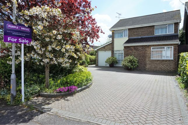 Thumbnail Detached house for sale in Chestnut Walk, Chelmsford