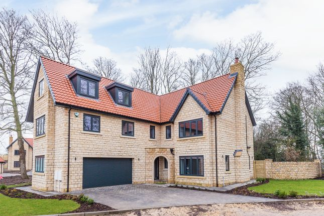 Thumbnail Detached house for sale in Treetops, Maplewood Place, Abbes Walk, Burghwallis, Doncaster
