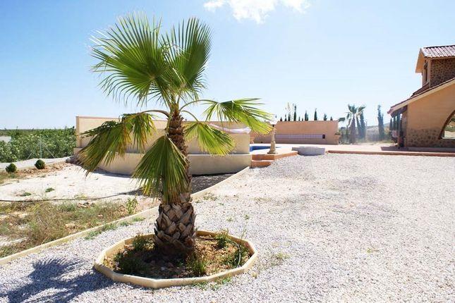 Image8 of Pinoso, Alicante, Spain