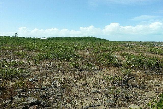 Land for sale in Deadman's Cay Airport (Lgi), Deadman's Cay Settlement, The Bahamas