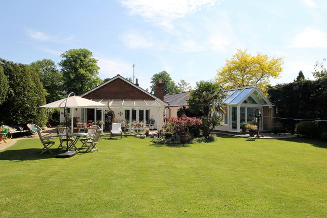 Thumbnail Detached bungalow for sale in Howard's Lane, Holybourne, Hampshire