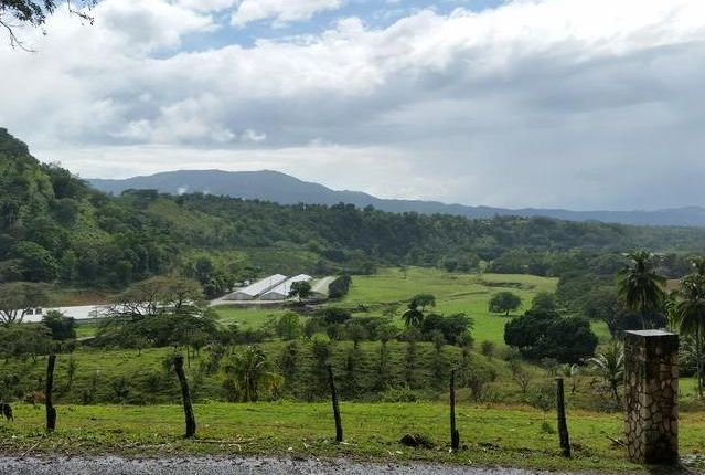 Thumbnail Farm for sale in Riversdale, Saint Catherine, Jamaica