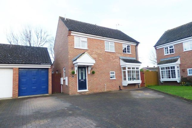Thumbnail Detached house to rent in Maytrees, St. Ives, Huntingdon