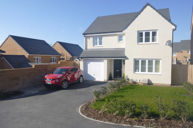 Thumbnail Detached house to rent in Shellduck Close, Bude