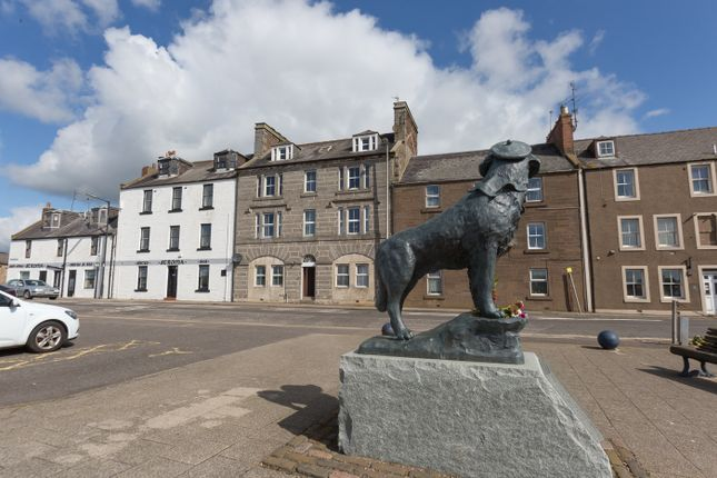 View Of Bamse Memorial Statue