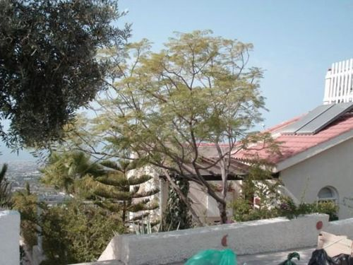 2 bed town house for sale in Tsada, 2 Bed Detached Villa - Large Plot Only €150, Cyprus