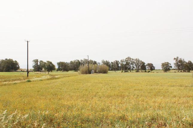 Thumbnail Land for sale in Guzelyurt, Kyrenia