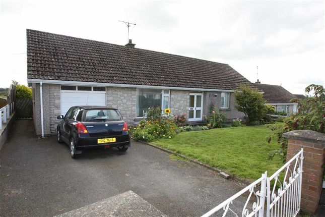 Thumbnail Detached bungalow to rent in Barban Hill, Dromore