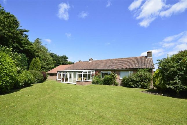 Thumbnail Detached bungalow for sale in Scalby Beck Road, Scalby, Scarborough