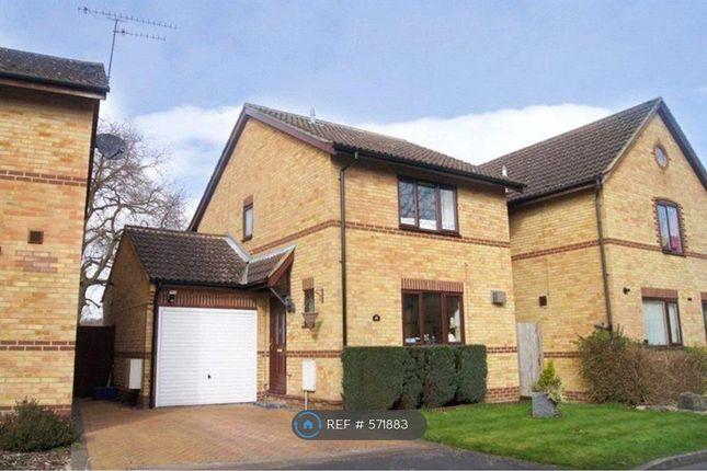 Thumbnail Detached house to rent in Newton Road, Farnborough