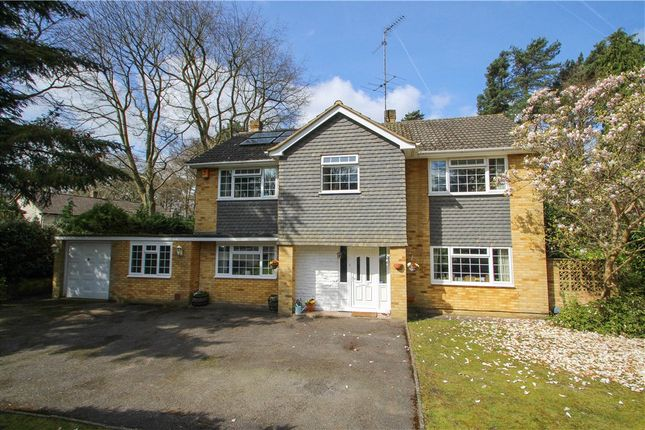 Thumbnail Detached house for sale in Ardrossan Avenue, Camberley, Surrey