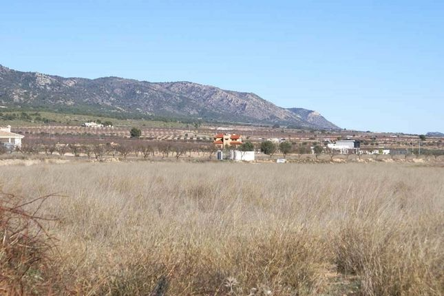Image5 of Pinoso, Alicante, Spain