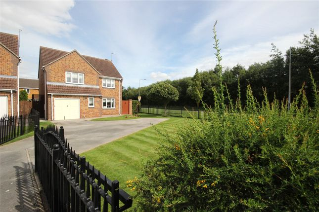 Thumbnail Detached house for sale in Santolina Way, Hull