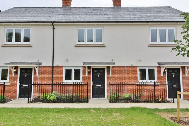 Thumbnail Terraced house to rent in Houghton Avenue, Waterlooville
