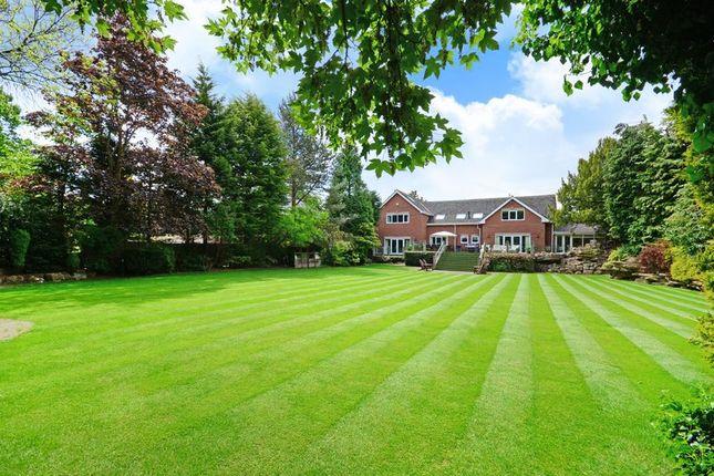 Garden & Rear Of Property
