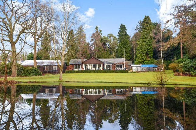 Thumbnail Detached bungalow for sale in Sunningdale, Berkshire