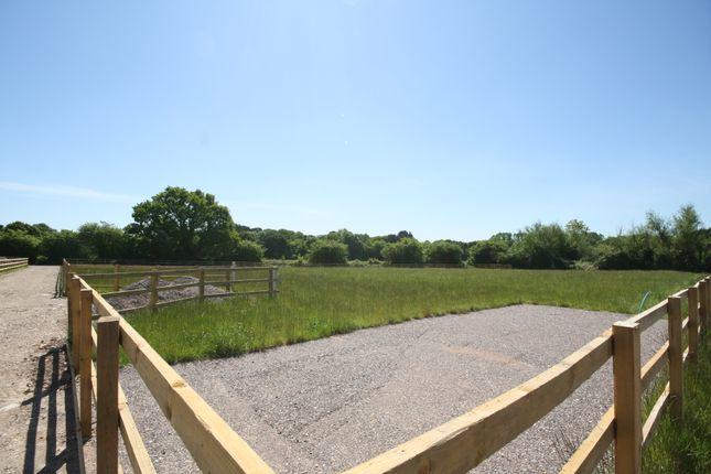 Thumbnail Equestrian property for sale in Sandy Lane, Shedfield, Southampton