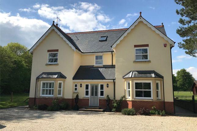 Thumbnail Detached house to rent in Brislands Lane, Four Marks, Alton, Hampshire