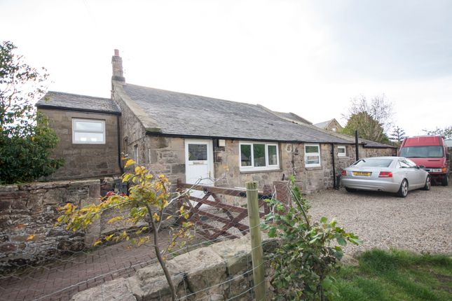 Thumbnail Bungalow for sale in South End, Longhoughton, Alnwick