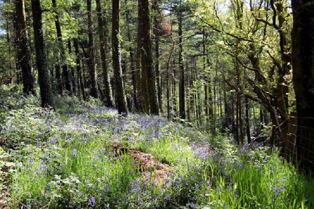 Thumbnail Land for sale in Coed Cerrig, Myddfai, Llandovery, Carmarthenshire.