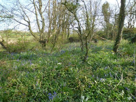 Bluebell Woods of Pentrefelin, Amlwch, Sir Ynys Mon LL68