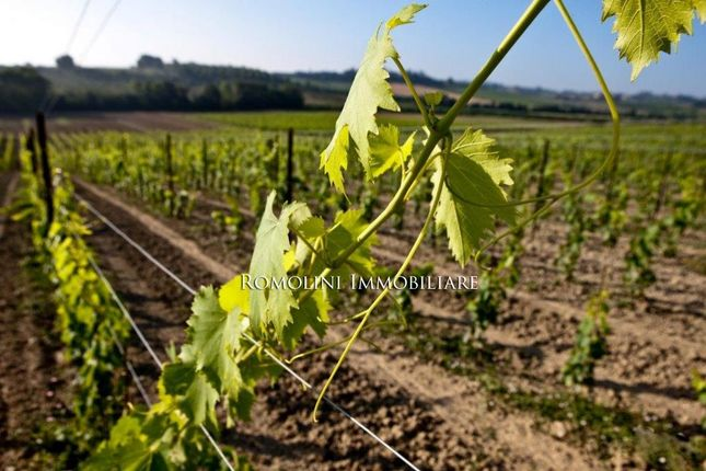 Farm for sale in Montepulciano, Tuscany, Italy
