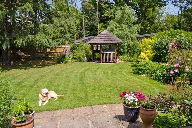 Thumbnail Detached bungalow for sale in The Drive, Ifold, Billingshurst, West Sussex
