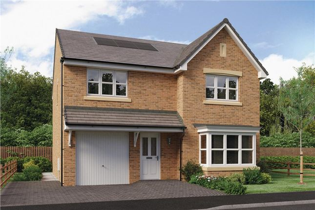 "Thumbnail Detached house for sale in ""Tait"" at Brora Crescent, Hamilton"