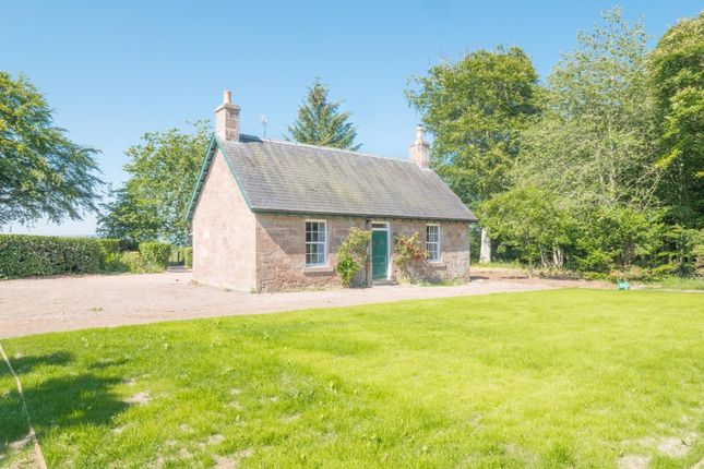 Thumbnail Detached house to rent in Craigo, Montrose
