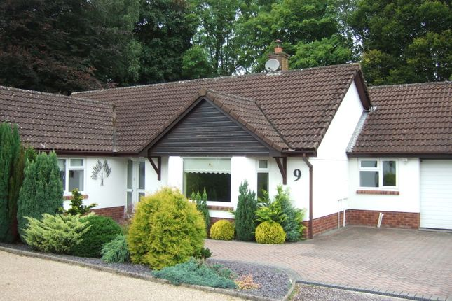 Thumbnail Detached bungalow to rent in Rookwood Close, Honiton, Devon