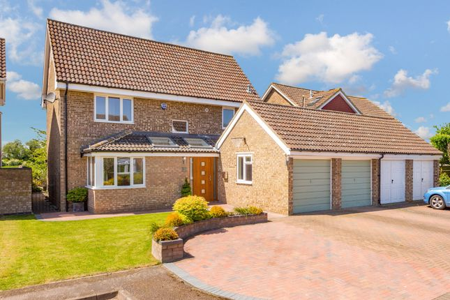 Thumbnail Detached house for sale in Kittiwake Close, Biggleswade