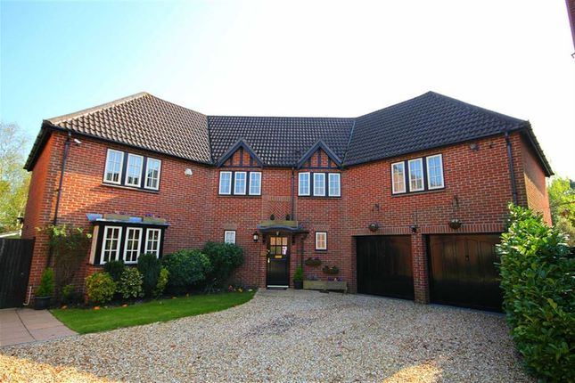 Thumbnail Detached house for sale in Matchams Close, Ringwood, Hampshire