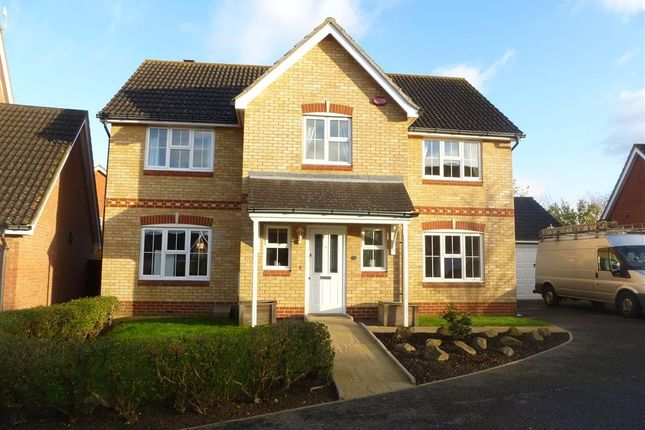 Thumbnail Detached house to rent in Kestrel Close, Kingsnorth, Ashford