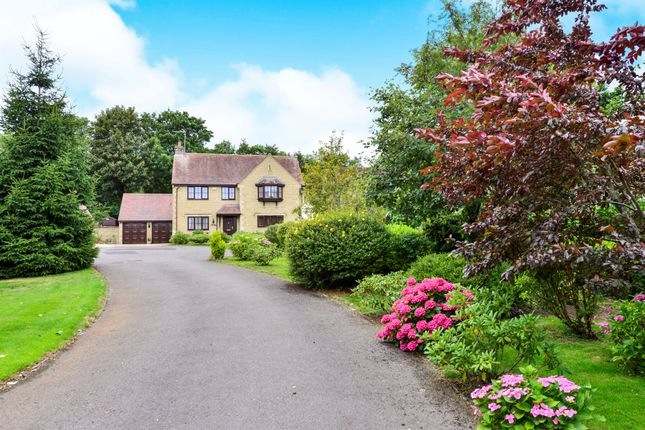 Thumbnail Detached house for sale in The Sycamores, Bourton, Gillingham