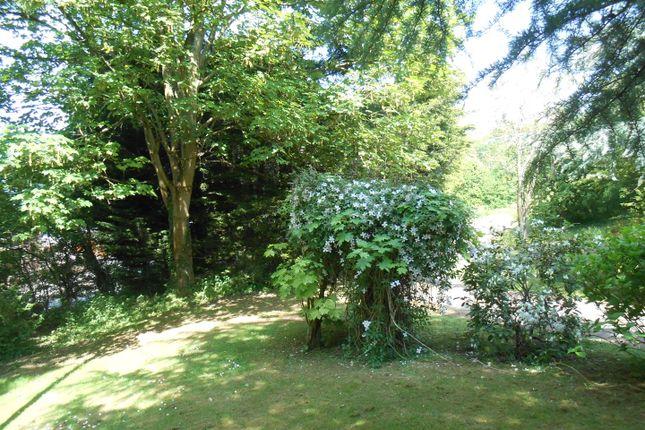 Plot At Brambles, Plot In Summer (2)