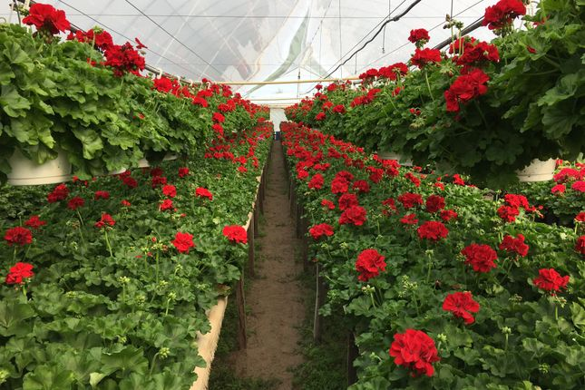 Thumbnail Farm for sale in Kiskunhalas, Hungary