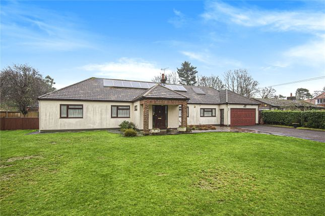 Thumbnail Bungalow for sale in Roe Downs Road, Medstead