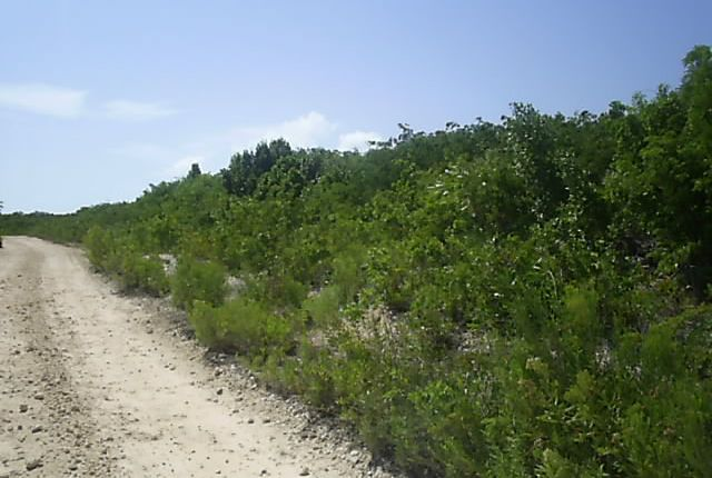 Land for sale in North, Long Island, The Bahamas