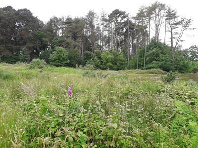 Thumbnail Land for sale in Treskerby Woods, Opposite Scorrier Filling Station, Truro, Scorrier, Cornwall