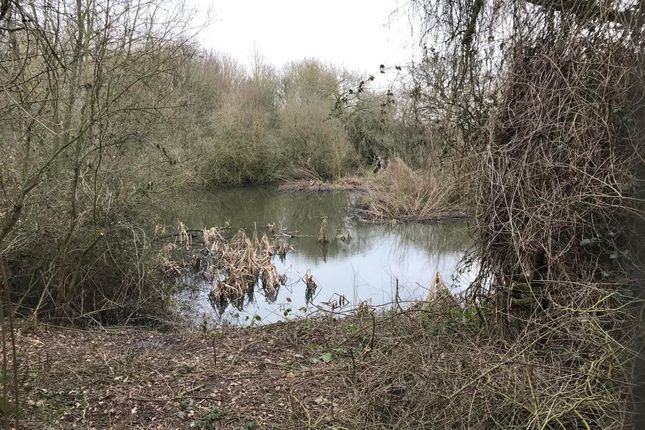 Thumbnail Land for sale in Church Lane, West Hanningfield, Chelmsford