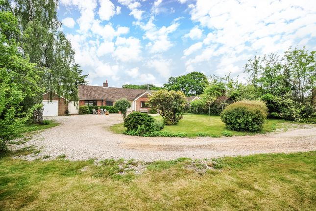 Thumbnail Detached bungalow to rent in Ball Hill, Newbury
