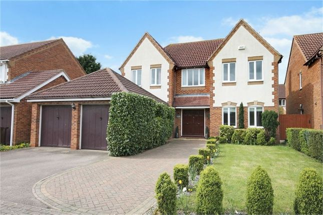 Thumbnail Detached house for sale in Magnolia Close, Abington Vale, Northampton