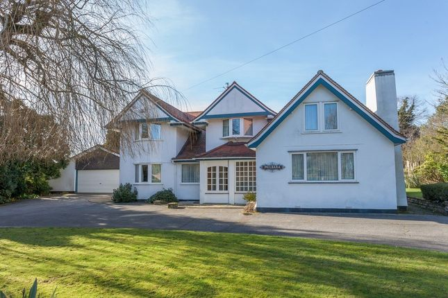 Thumbnail Detached house for sale in Chestnut Avenue, Lowestoft