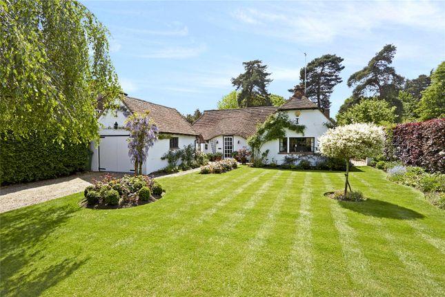 Thumbnail Detached bungalow for sale in Sandpit Hall Road, Chobham, Surrey