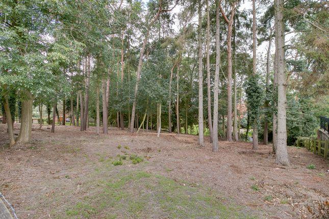 Badger Brook Wood, Badger Brook Lane, Astwood Bank B96