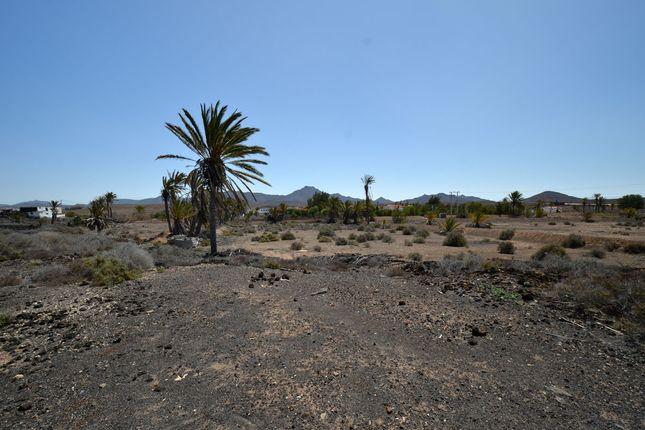 Huge Field of La Mata, Tiquital 8, Spain