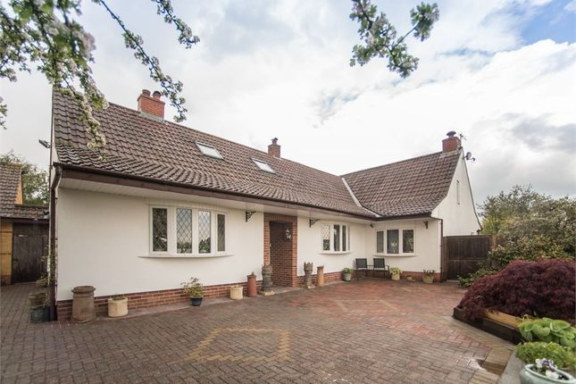 Thumbnail Detached house for sale in Isleport Lane, Highbridge, Somerset