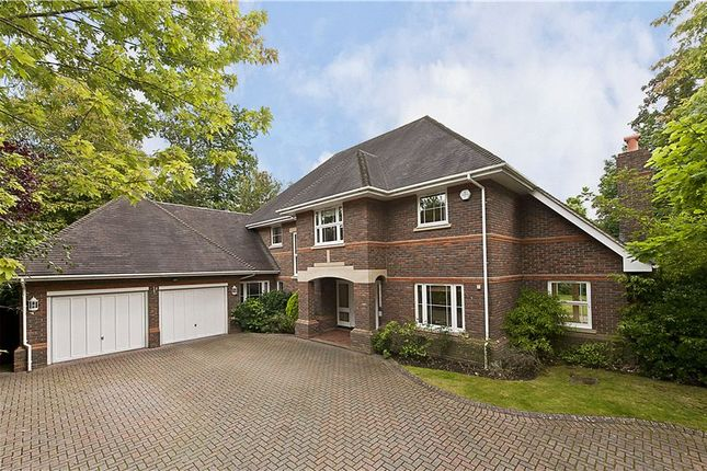 Thumbnail Detached house to rent in Blue Cedars Place, Cobham, Surrey